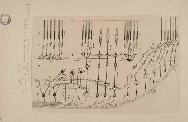Archivo de Santiago Ramón y Cajal