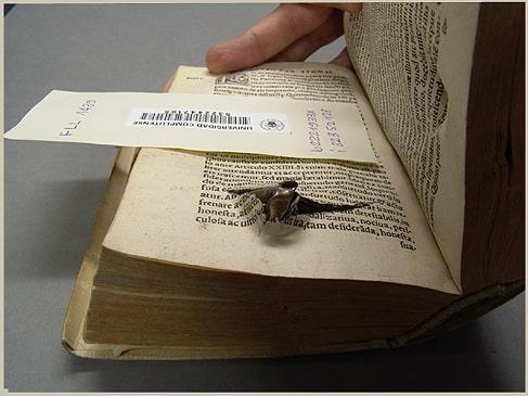 Encontrados en libros - Metralla
