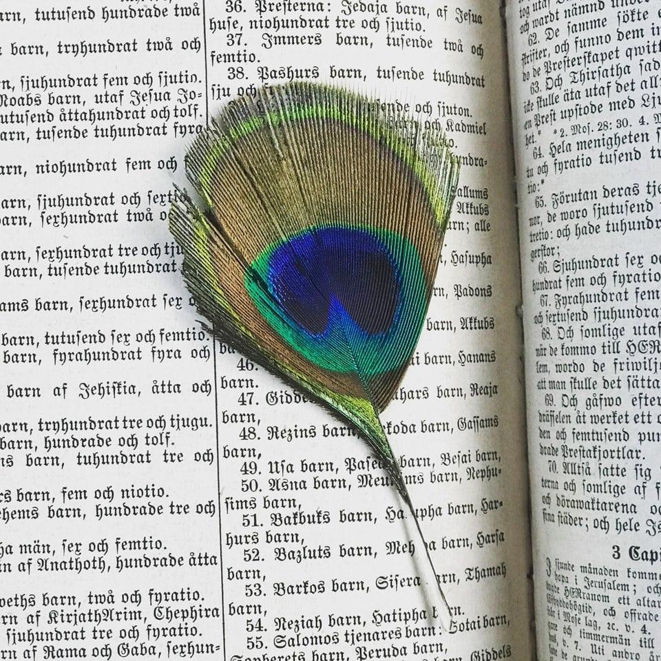 Encontrados en libros - Pluma pavorreal